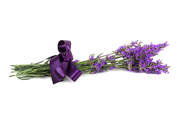 Fleur de lavande isolée