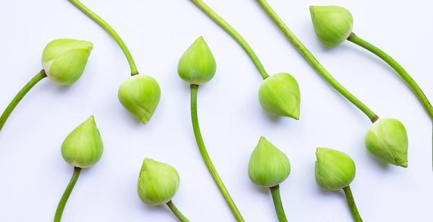 Fleur de lotus sur blanc