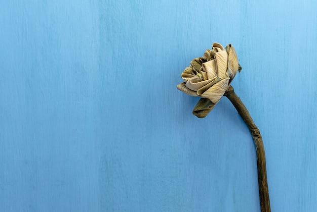 Fleur de lotus flétrie