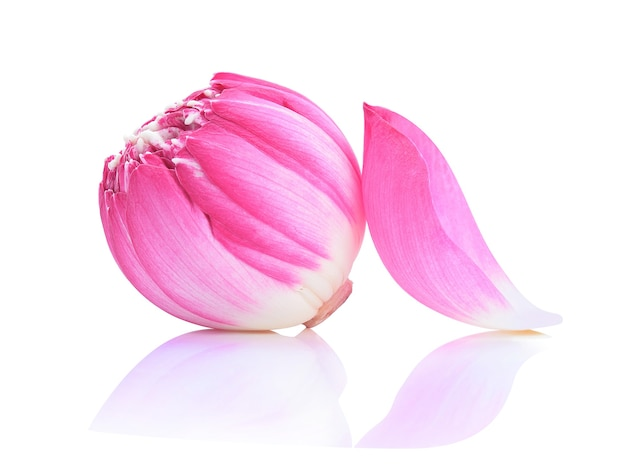 Fleur de lotus isolé sur blanc