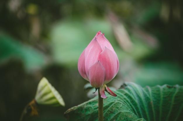 Fleur de lotus méditation concept croyances religieuses asiatiques calme zen méditer fond