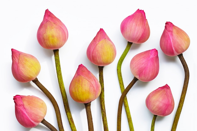 Fleur de lotus rose sur fond blanc.