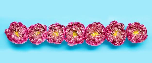 Fleur de lotus rose sur fond bleu. copier l'espace