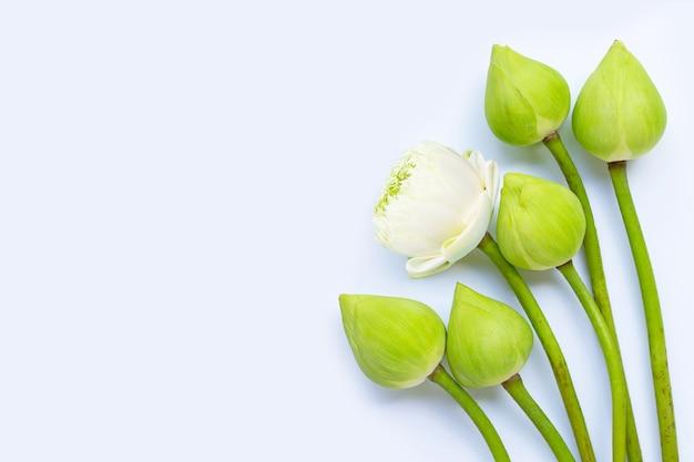 Fleur de lotus. vue de dessus