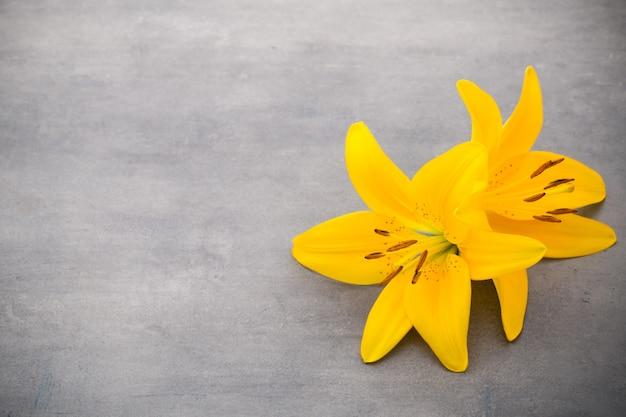 Fleur de lys avec bourgeons sur fond gris.