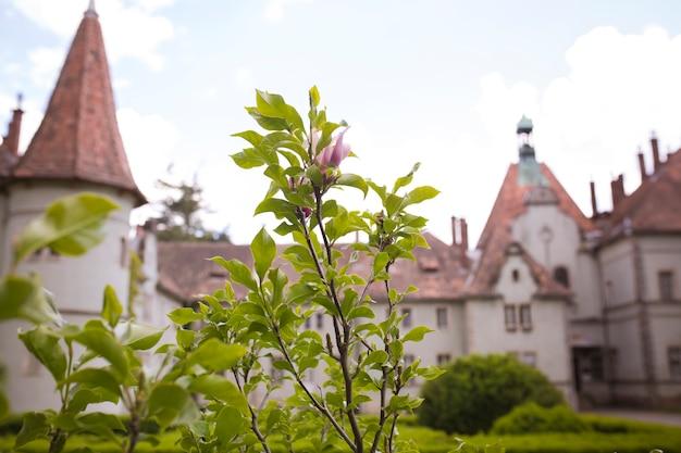 Fleur de magnolia sur fond de château