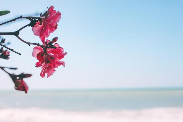 Fleur de magnolia rose sur la mer