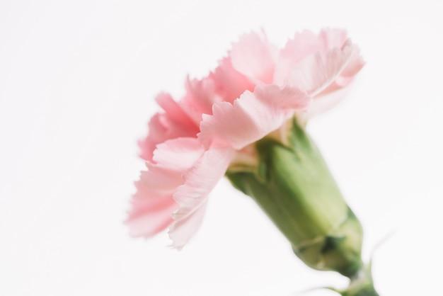 Fleur mignonne sur fond blanc