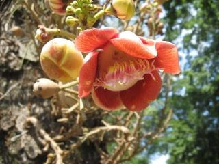 Fleur, nature, pédales