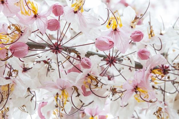 Fleur naturelle incroyable vue sur la nature des fleurs qui fleurissent dans le jardin sous la lumière du soleil au milieu de la journée d'été.