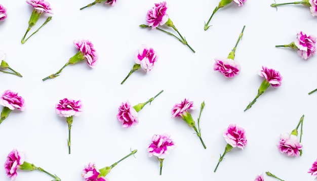 Fleur d'oeillet sur fond blanc.