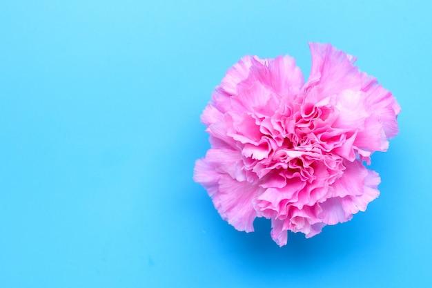 Fleur d'oeillet sur fond bleu.