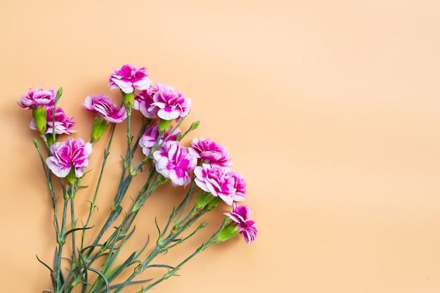 Fleur d'oeillet sur surface orange