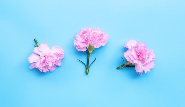 Fleur d'oeillet sur table bleue.