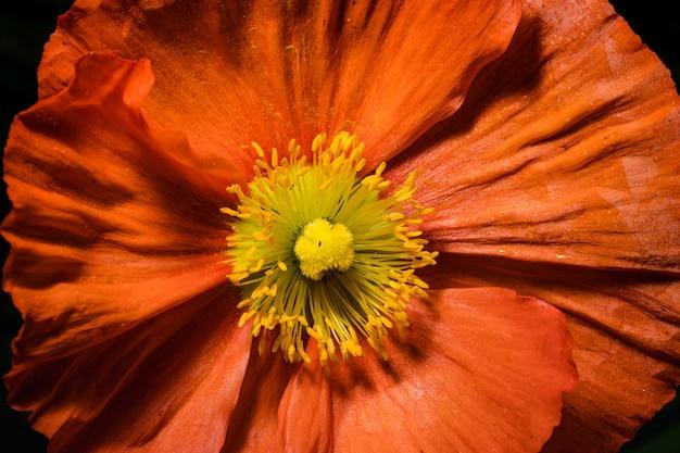 Fleur orange et jaune