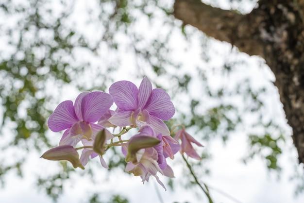Fleur (orchidaceae, fleur d'orchidée) violet blanc