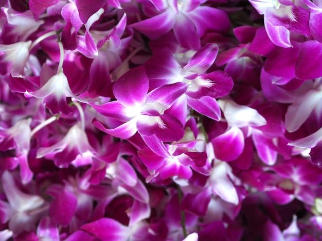 Fleur d'orchidée agrandi en arrière-plan de jardin d'hiver