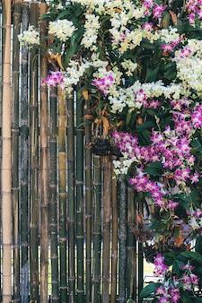 Fleur d'orchidée avec belle sur bambou.