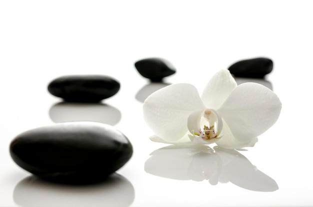 Fleur d'orchidée blanche avec pierres de spa. dof peu profond.