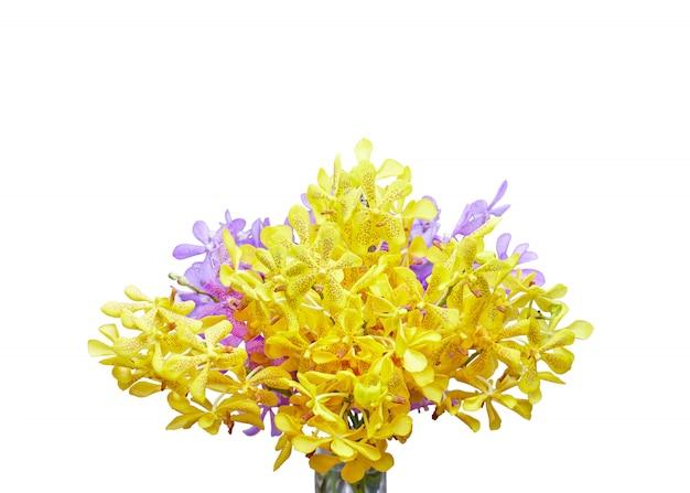 Fleur d'orchidée closeup, jaune et violet isolé sur fond blanc avec un masque d'écrêtage