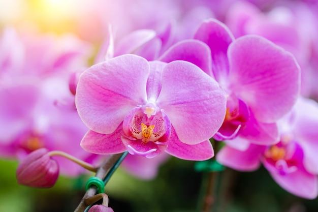 Fleur d'orchidée dans le jardin en hiver ou au printemps