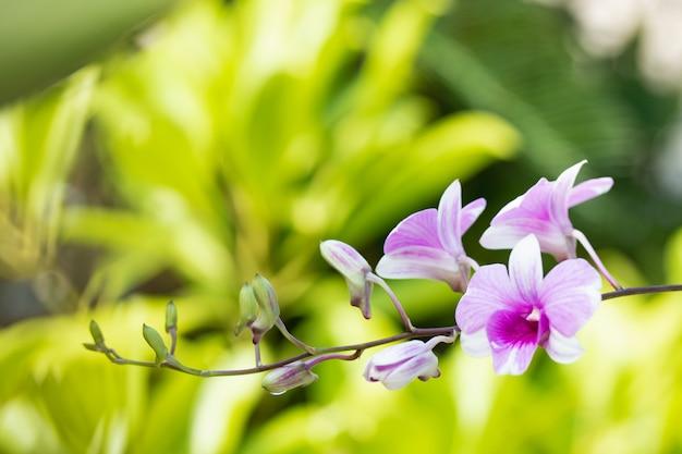 Fleur d'orchidée dans le jardin