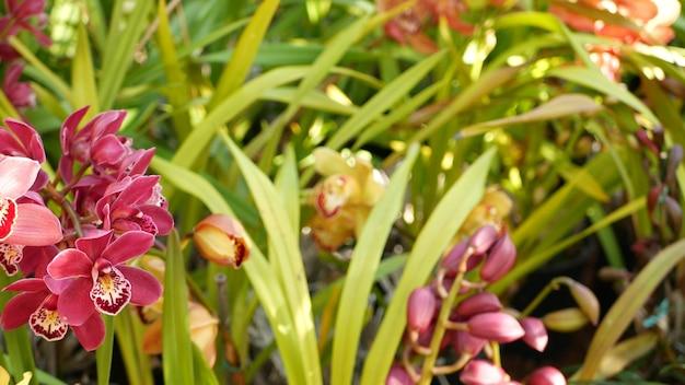 Fleur d'orchidée, floraison florale. jardin botanique de forêt tropicale de jungle tropicale exotique, paradis