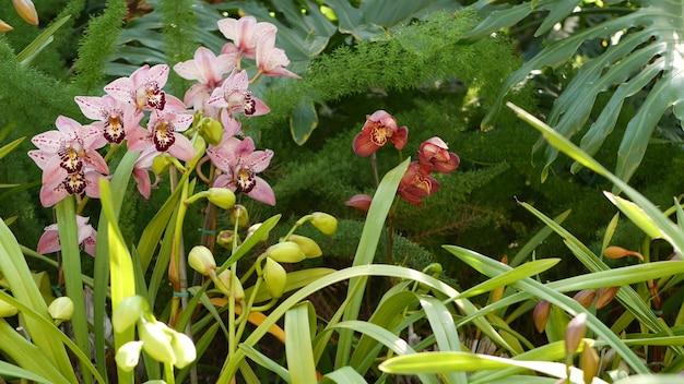 Fleur d'orchidée. floraison florale. verdure botanique exotique de la forêt tropicale de la jungle tropicale
