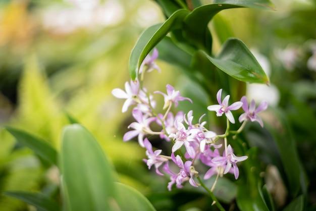 Fleur d'orchidée avec fond naturel