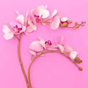 Fleur d'orchidée sur fond rose