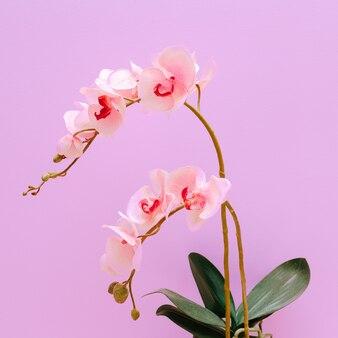Fleur d'orchidée sur un mur de fond rose. concept d'amateur de plantes