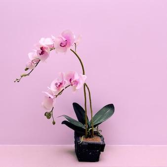 Fleur d'orchidée sur un mur de fond rose
