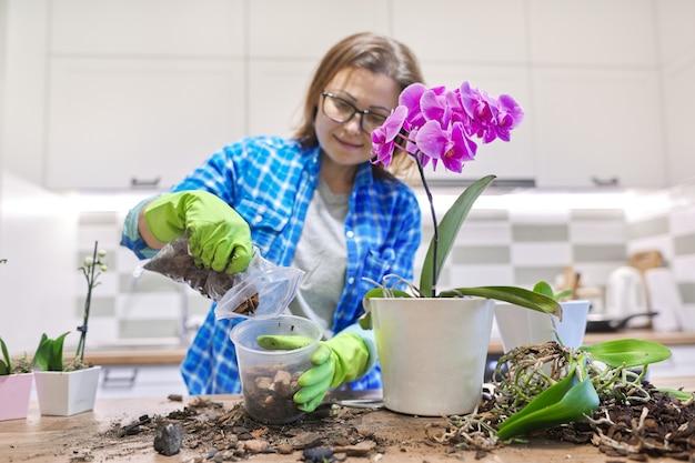 Fleur d'orchidée phalaenopsis en pot, femme s'occupant de l'usine de transplantation, arrière-plan de l'intérieur de la cuisine