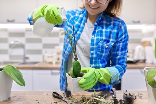 Fleur d'orchidée phalaenopsis en pot, femme s'occupant de l'usine de transplantation, intérieur de la cuisine en arrière-plan. usine de pulvérisation pulvérisateur femelle