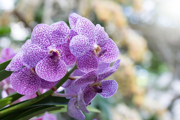 Fleur d'orchidée pourpre