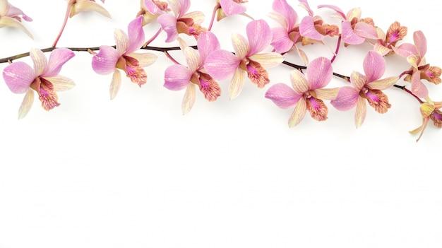 La fleur d'orchidée rose sur blanc