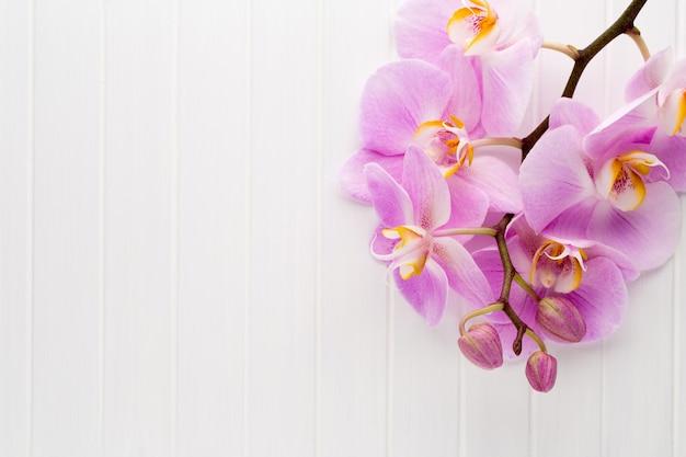 Fleur d'orchidée rose sur fond texturé en bois blanc, espace pour un texte.