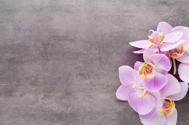 Fleur d'orchidée rose sur fond texturé gris