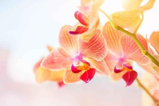 Fleur d'orchidée rouge. image macro, faible profondeur de champ