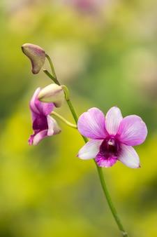 Fleur d'orchidée se bouchent
