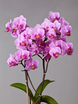 Fleur orchidée