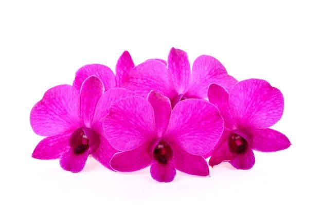 Fleur d'orchidées isolée