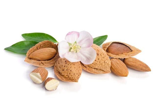Fleur de paradis aux noix d'amande isolé sur fond blanc