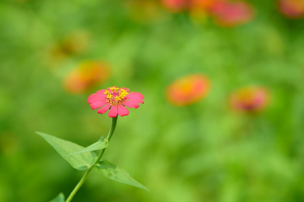Fleur de pétale rose avec tige de pollen sur fond flou
