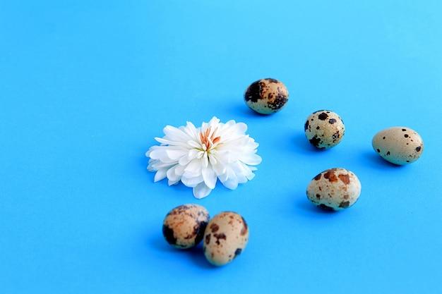Fleur avec des pétales blancs et des oeufs de caille sur un concept de pâques de fond bleu.