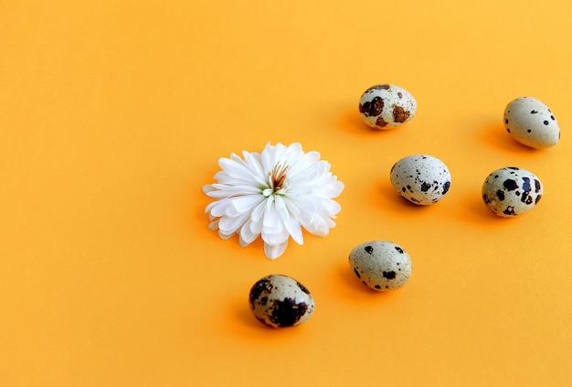 Fleur avec des pétales blancs et des oeufs de caille sur un concept de pâques de fond jaune.