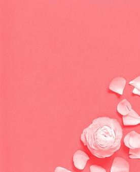Fleur et pétales sur une vue de dessus de fond rose