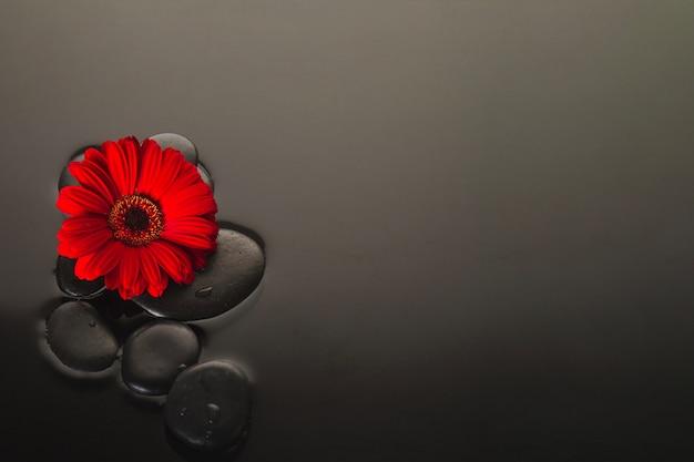 Fleur et pierres volcaniques