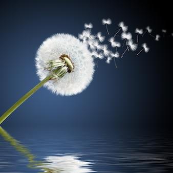 Fleur de pissenlit avec des plumes volantes sur ciel sombre.