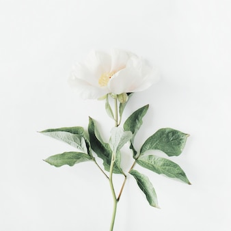 Fleur de pivoine beige solitaire